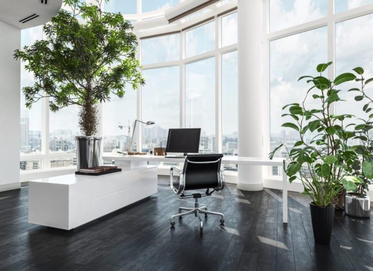 Plant Displays